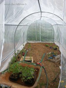 installation des plants de tomates dans la serre