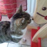 """petite visite du chat """"adoptif"""" (elle a une maîtresse qui habite non loin)"""