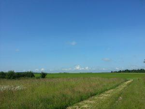 chemin des Buffards