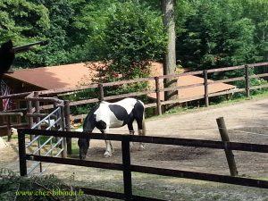 un cheval dans un ranch