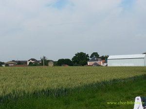 champs de blé derrière la mairie, côté église