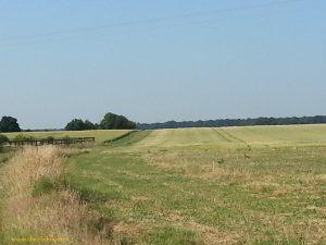 rencontres avec des lièvres, au loin dans les champs