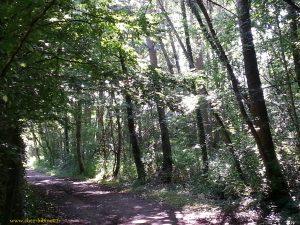 promenade dans les sous bois du chemin des peupliers