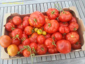 4.5 kg en provenance du jardin (Marmande et Monfavet)