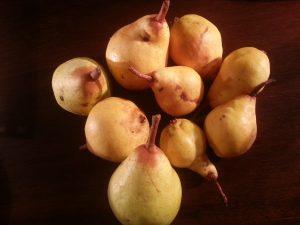 la première récolte de poires William du jardin, très parfumées :-)