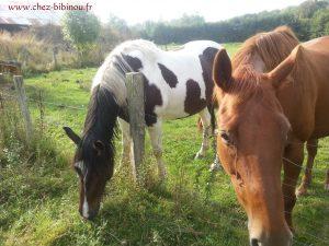 Bonjour les chevaux !