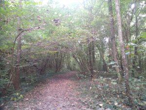 passage entre les propriétés, nous sommes dans les bois...