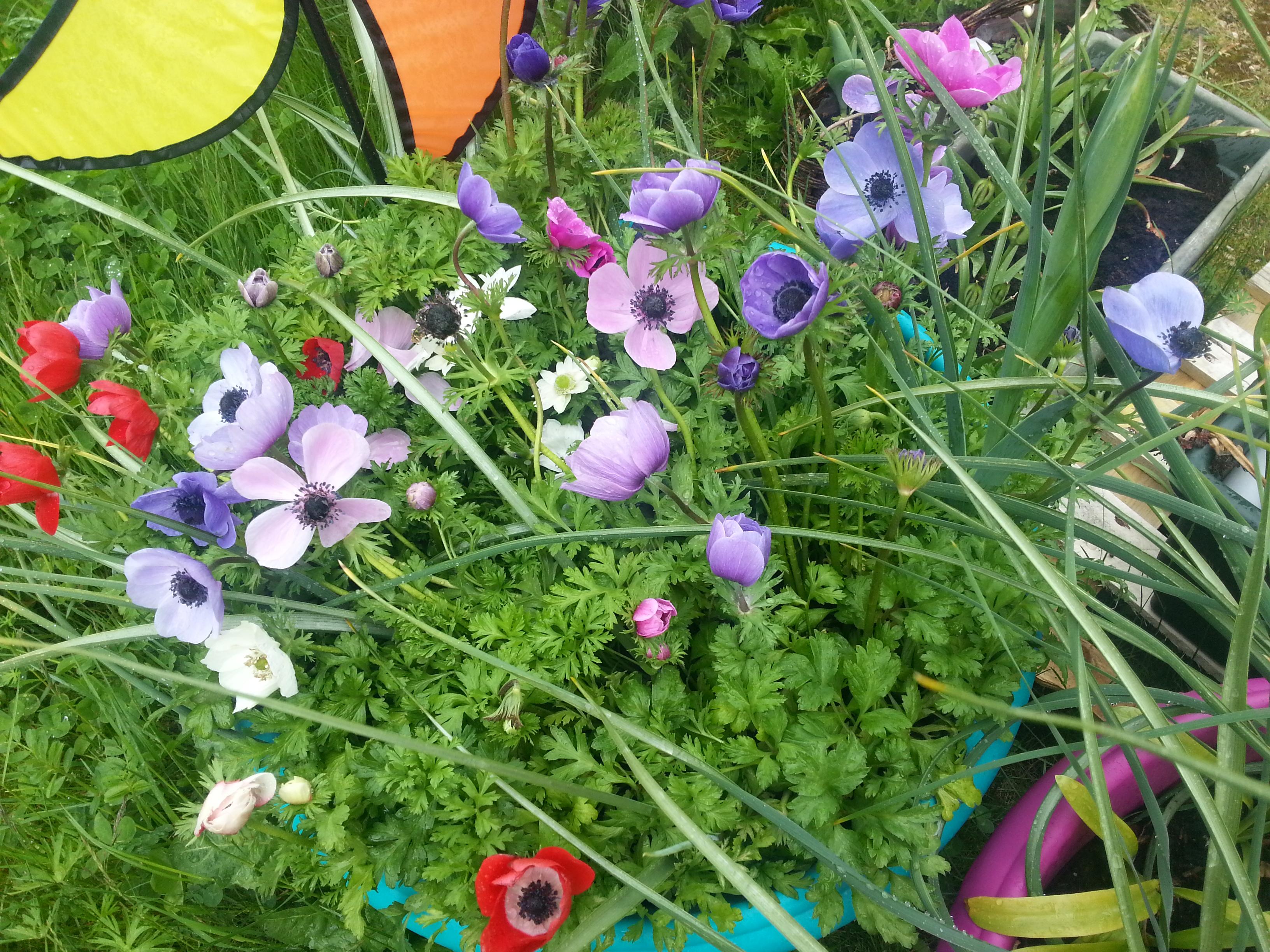 Le jardin de nanie chez bibinou for Le jardin en juin