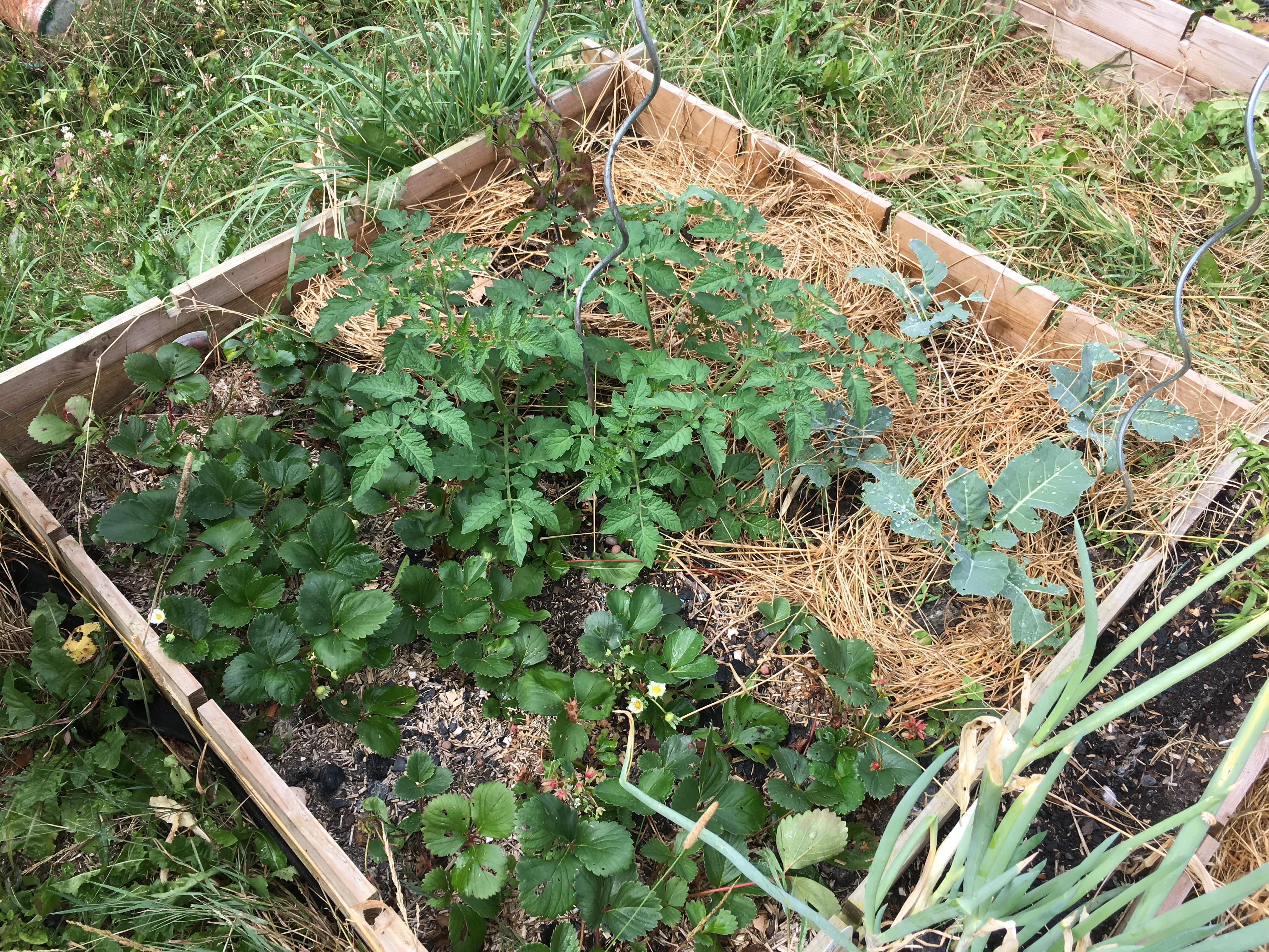 Jardin en juillet suite chez bibinou - Comment reconnaitre physalis comestible ...
